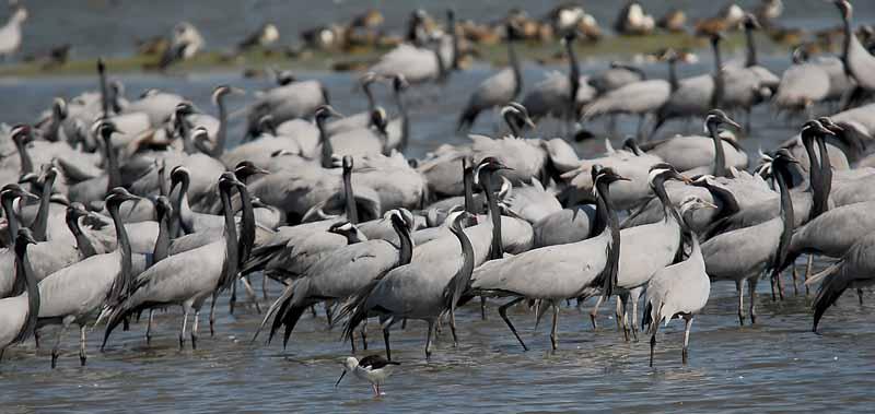 khijadiya-bird-sanctuary-in-india
